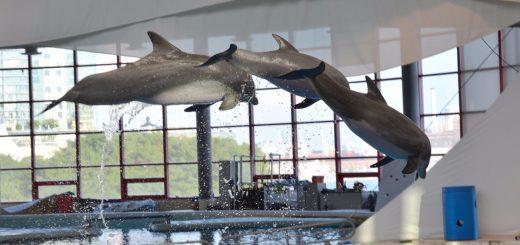 dolphin show baltimore